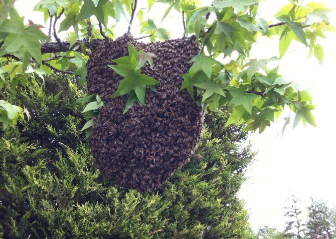 apiculteur a laval