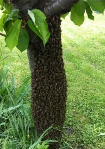 apiculteur orliénas