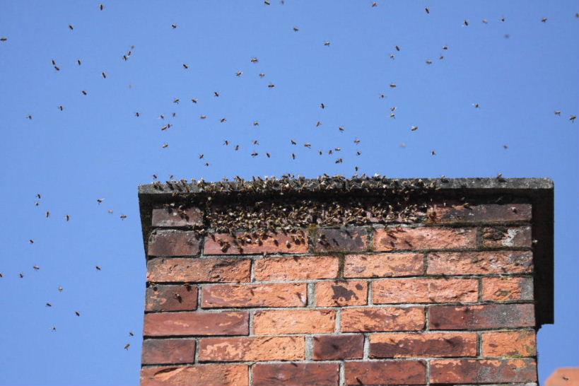 essaim abeilles dans cheminée